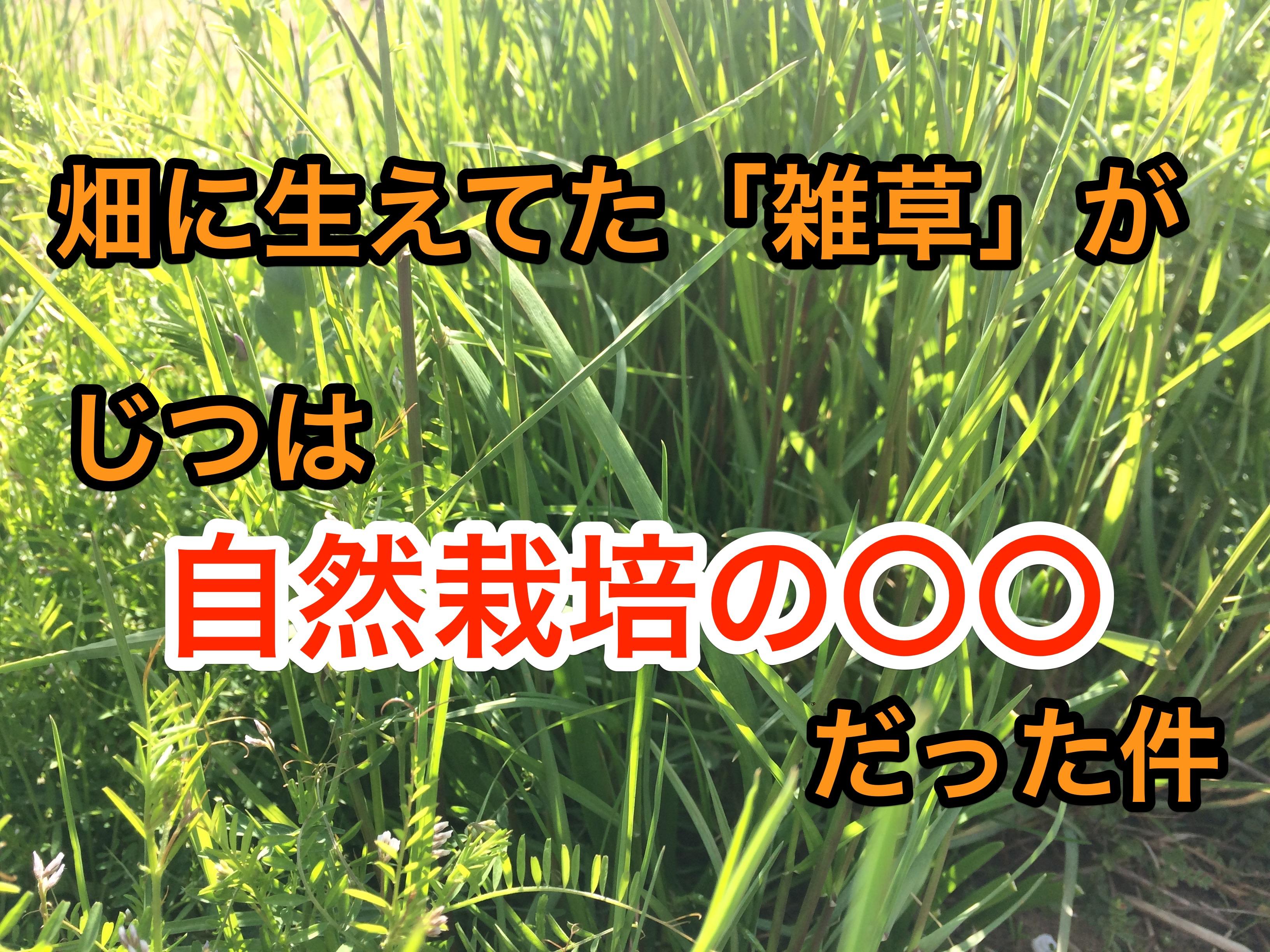 畑に生えてた「雑草」が、じつは「自然栽培の〇〇」だった件