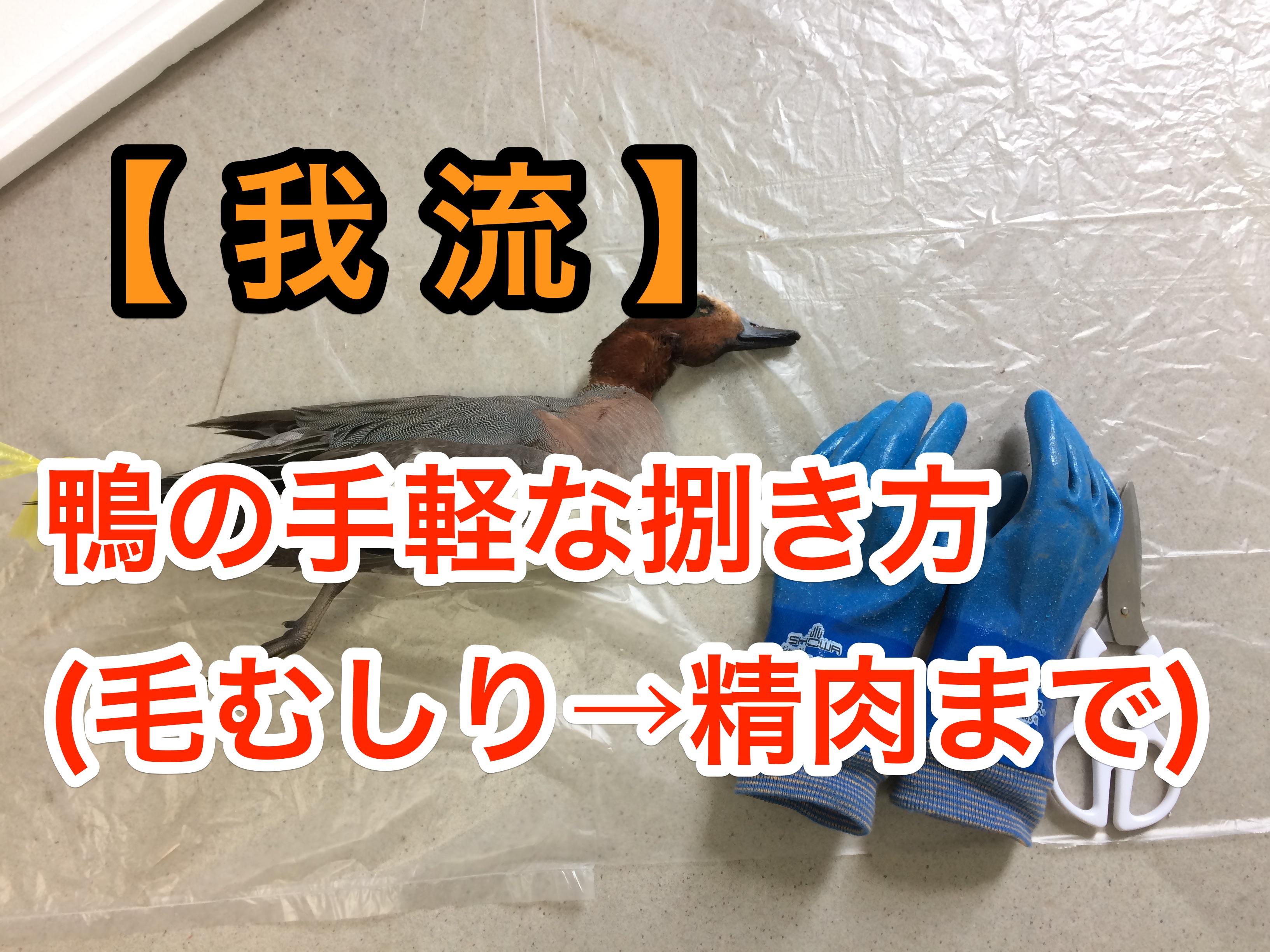 【詳細画像/我流】鴨の手軽なさばき方(毛むしり→精肉まで)