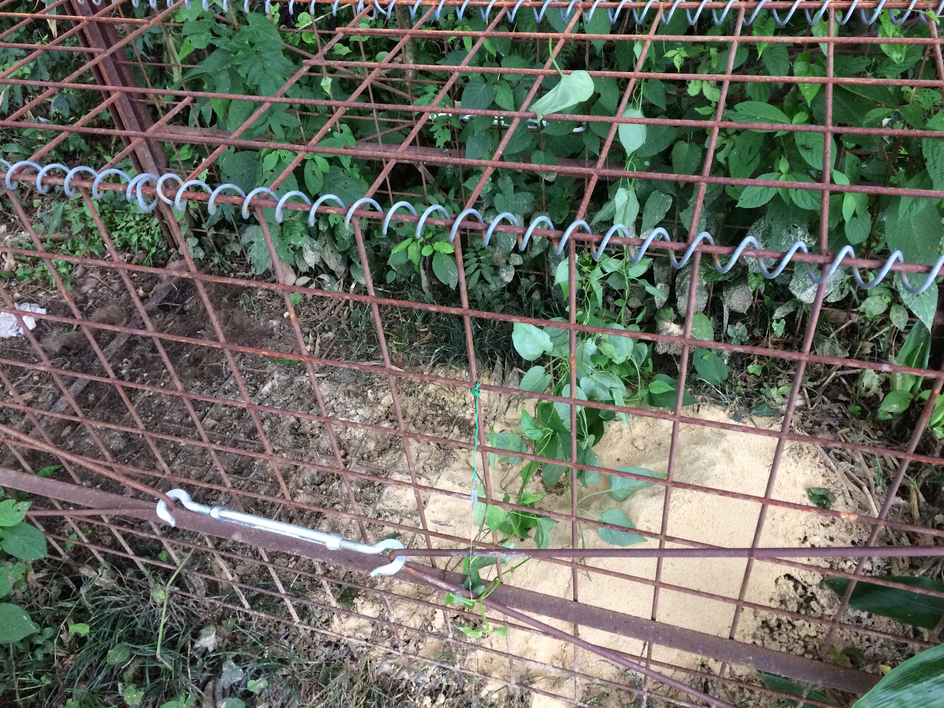 【罠猟】食べ跡から判別できる獲物の例(イノシシ、たぬき、アナグマ)