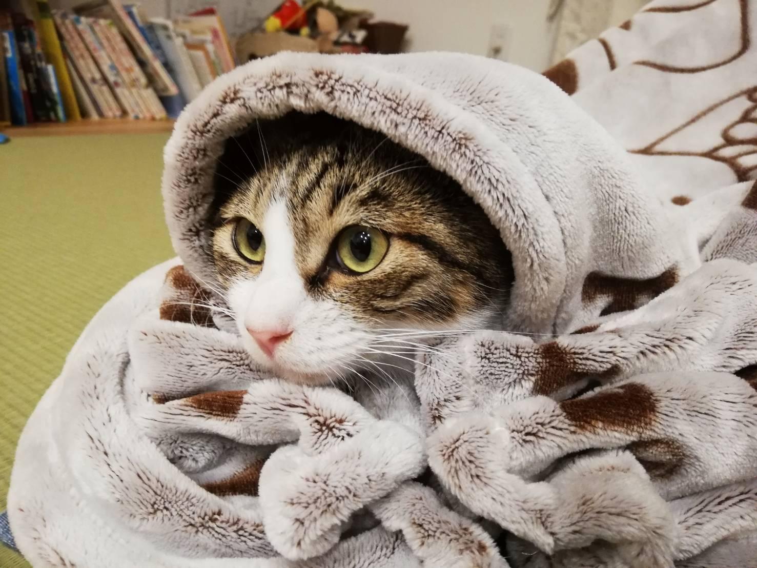 野良猫を拾って室内で飼うという選択、落ち着くまでにかかった費用まとめ