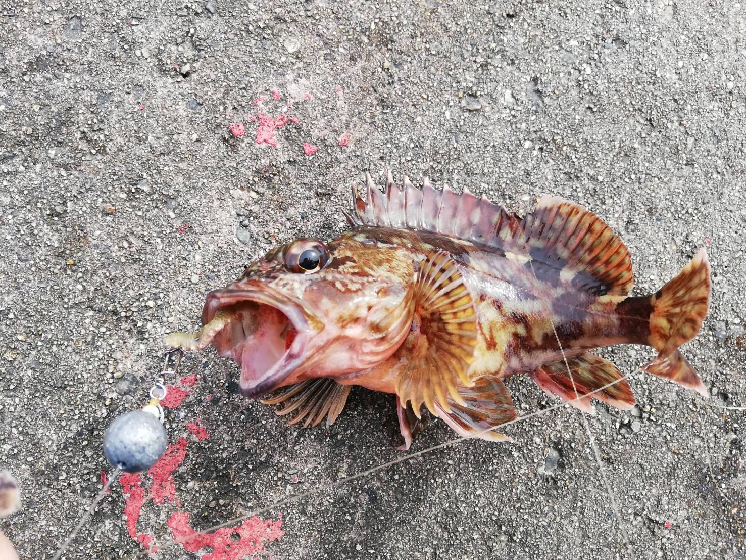 【釣果報告】穴釣りにはブラクリよりもジグヘッド!?2021年の釣り初め