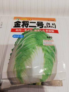 【畑の記録】9/5:冬野菜の定植とニンニクの植え付け